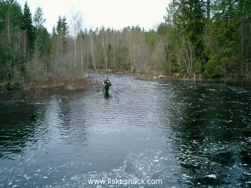 Nearby stream Snarjebacken where you can be fishing Rainbow Trout April-November
