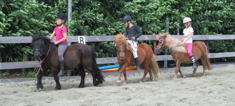 The lovely ponies.