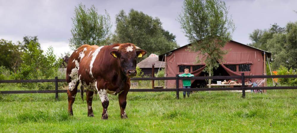The curious farmyard friends