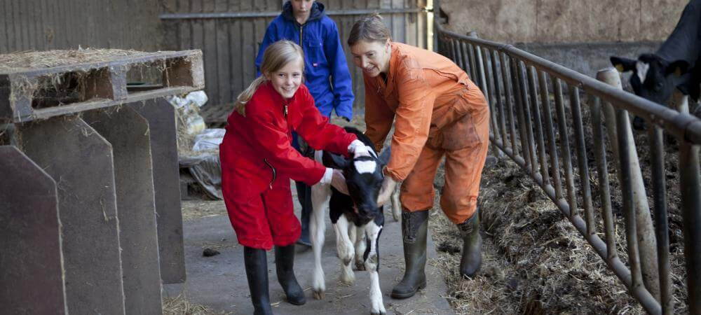 Join in the farmyard activities