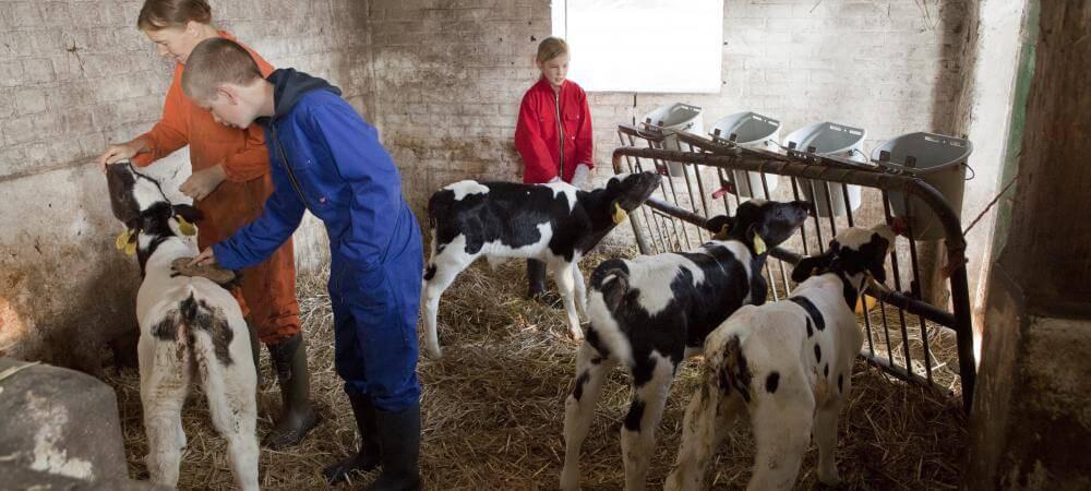 Join in the fun of the working farmyard