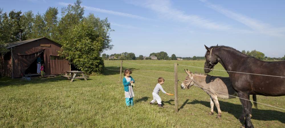 Meet the horses!