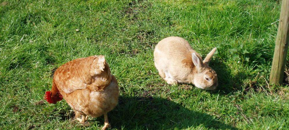 Come and meet the bunnies