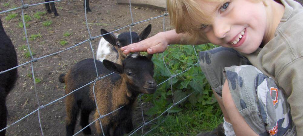 Come and meet the goats!
