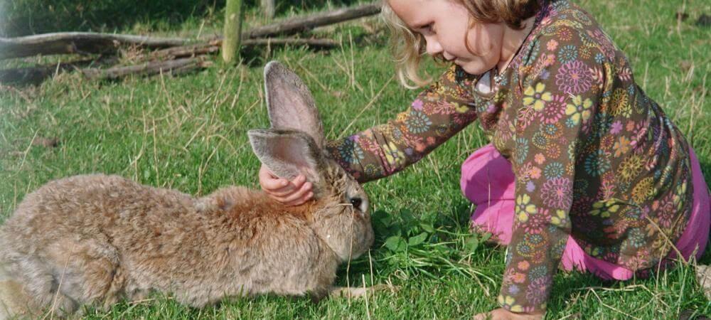 Lots of bunnies to meet!