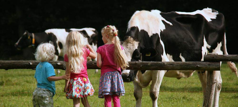 Children can learn about the farm life