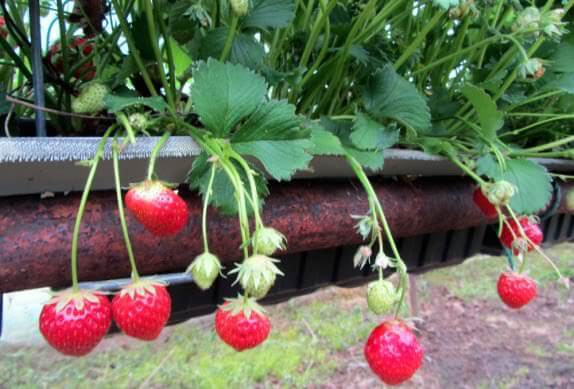 View of Strawberry Farm