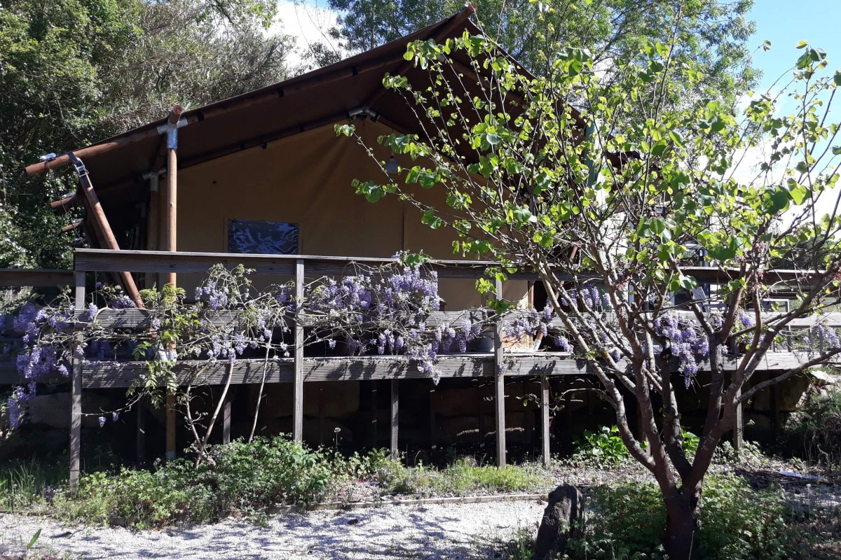 Safaritent Woody25-Casa Cha 'Tea house' in a japanese garden