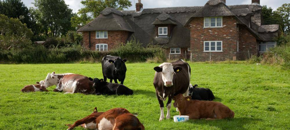 Our farm house!