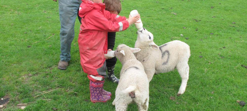 Feeling the lambs!