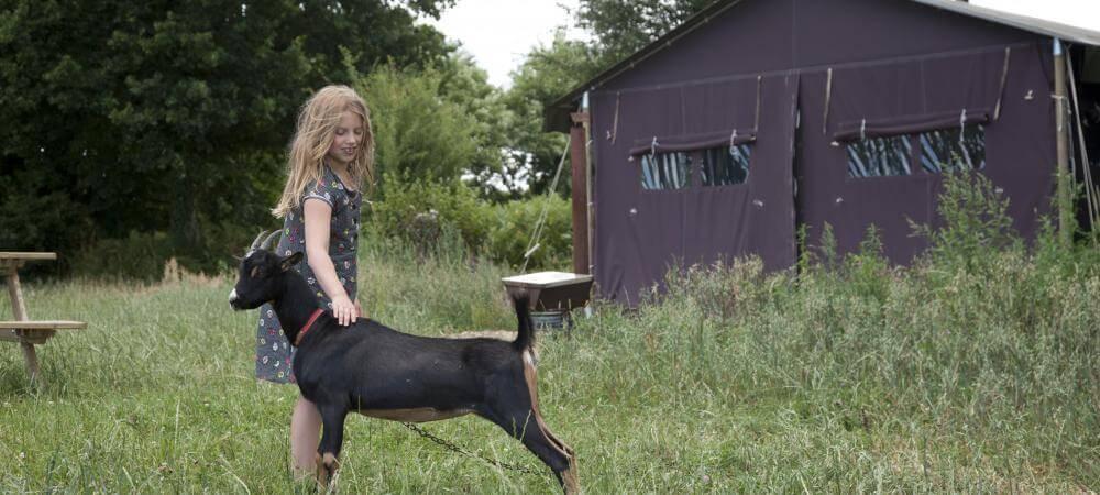 Meet the farmyard animals