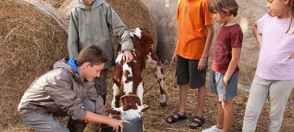 Meet the calves!