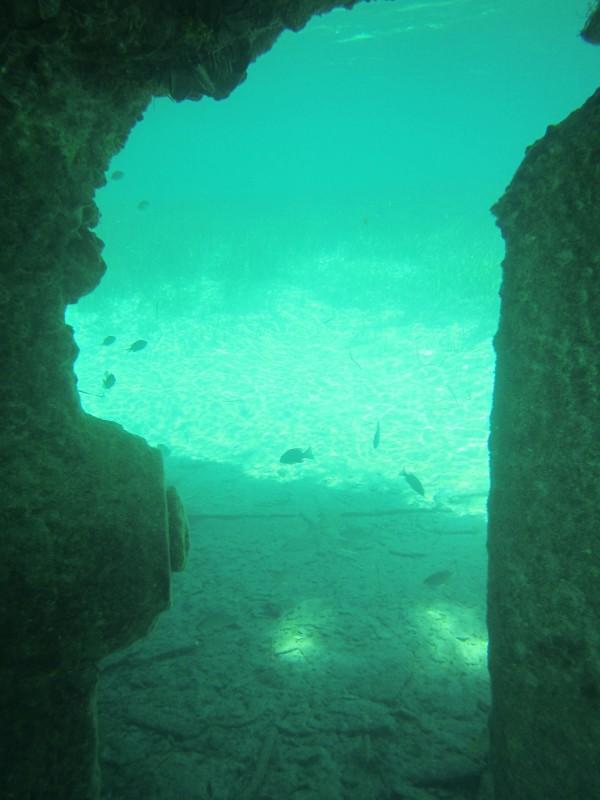 Fantastic snorkelling