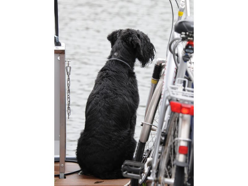 Pets are allowed on the vessel,