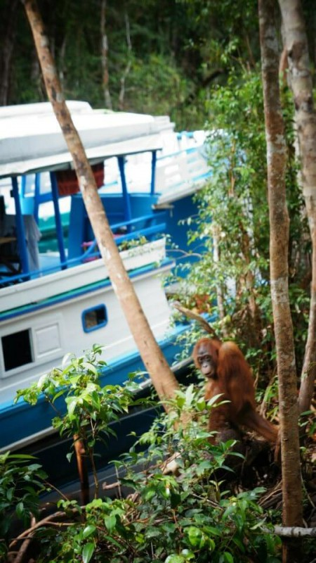 explore orangutan conservation