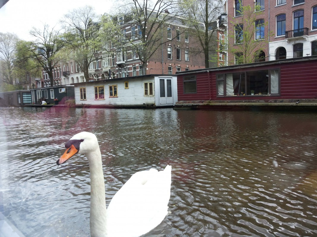 Swans, geese, ducks, seagull every day. Don't feed!