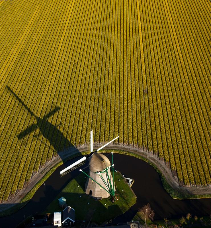 Windmill Keukenhof
