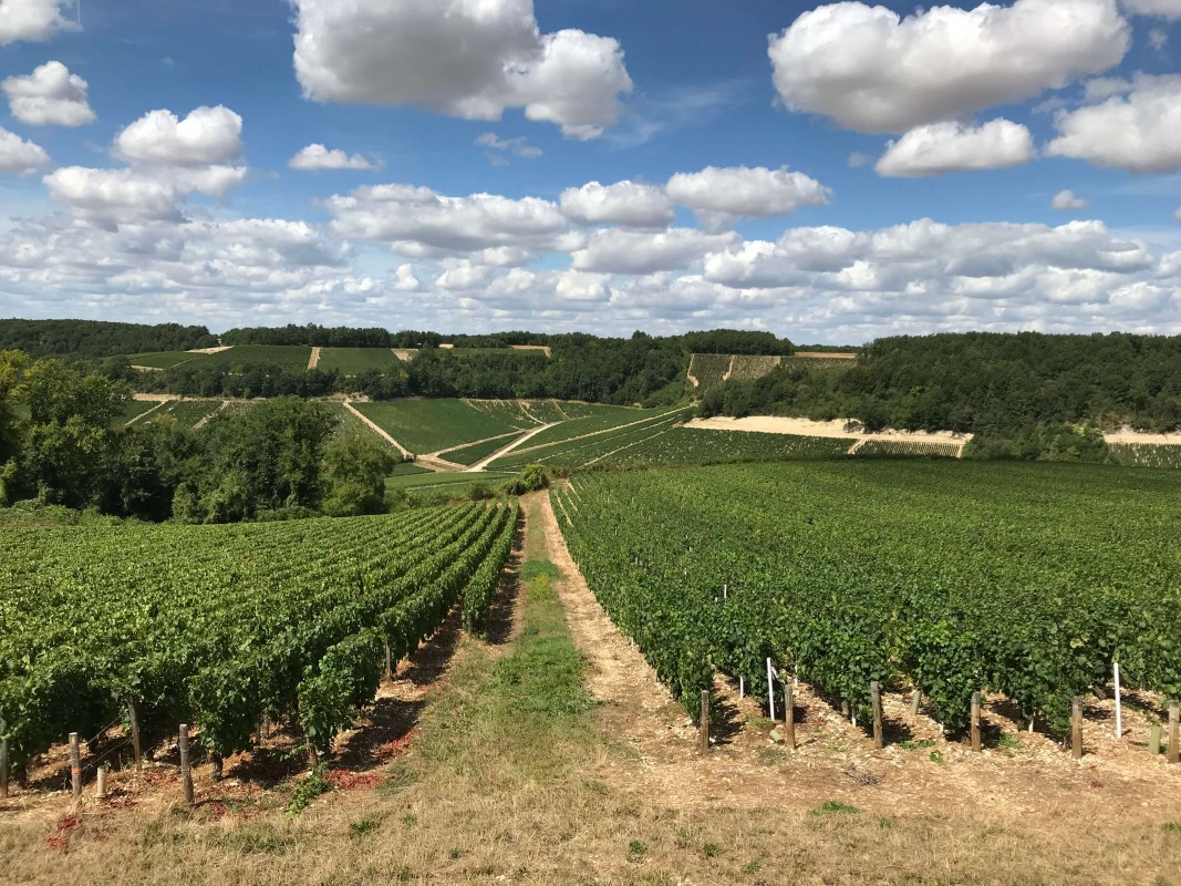 6-night all-inclusive cruise through the hills and villages of Northern Burgundy; enjoy gastronomy and adventure with our full crew at your service - vines of Chablis