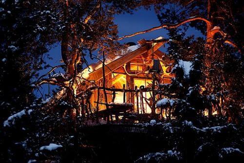 Beautiful Norway tree house