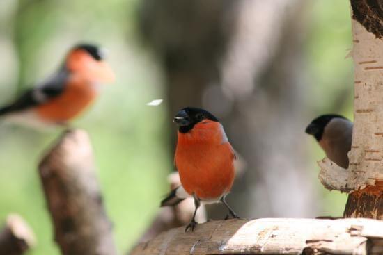 Beautiful wildlife