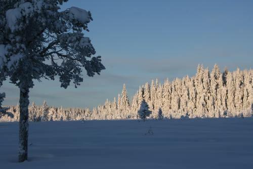 Norweigian wilderness