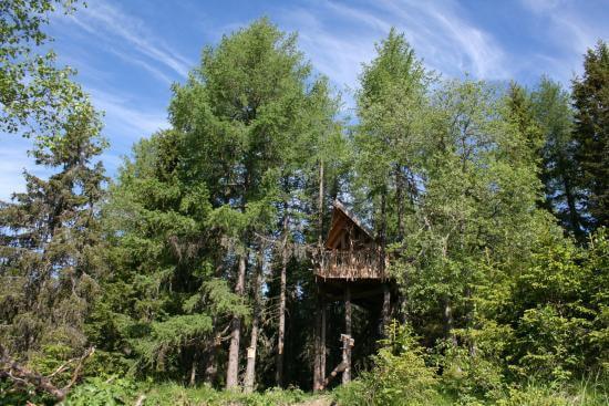 Perfect tree house location