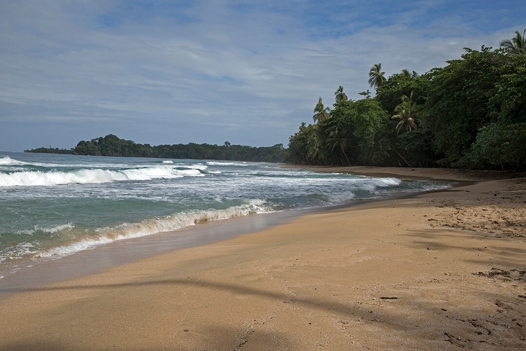 Tree House beach