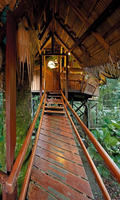 Tree House bridge