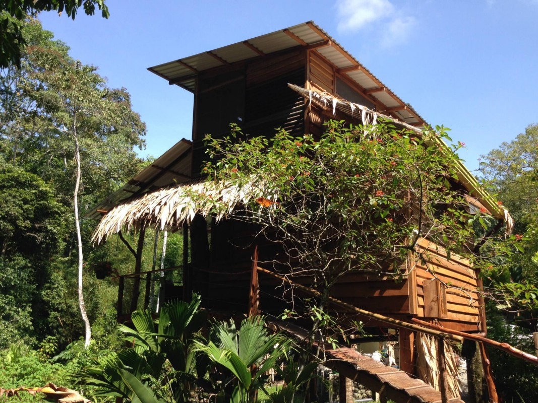 The Green Frog Treehouse