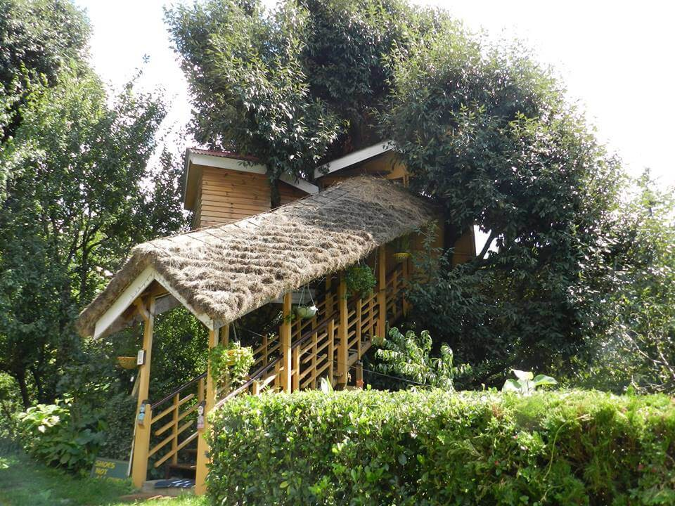 The Manali Treehouse