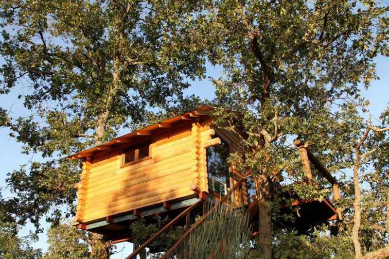 Up high on oak trees
