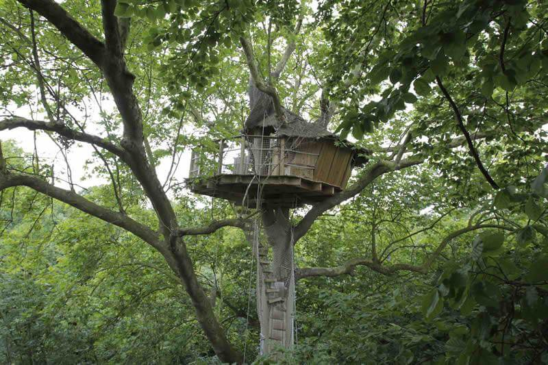Treehouse with a view