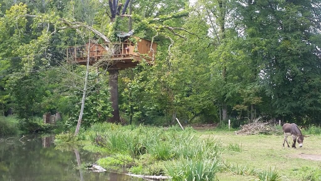 Treehouse in an Island