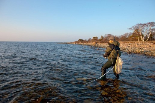 Sea Trout fishing at reefs nearby in March-April and October-December