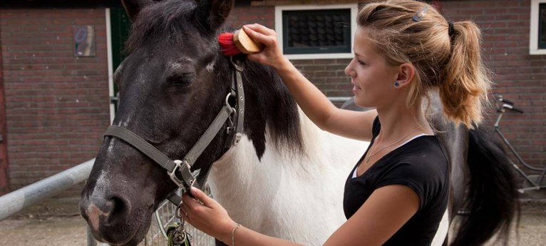 Enjoy looking after the horses