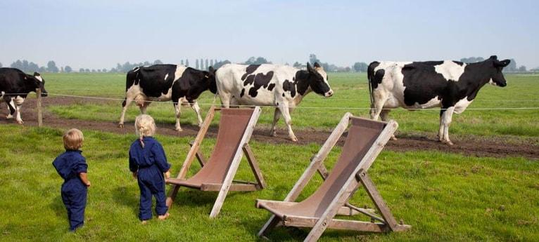 Meet the curious cows