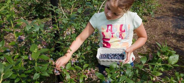 Lots of berries in Autumn
