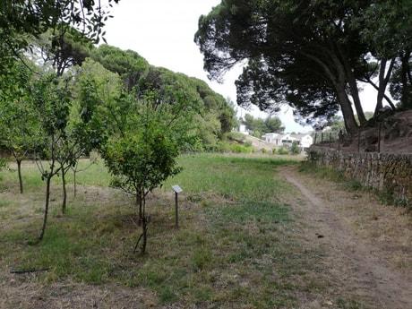 farm bio garden
