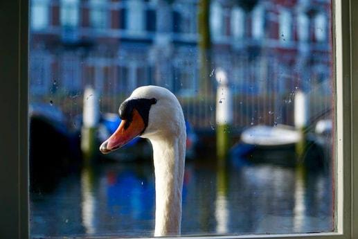 Houseboat 445 Amsterdam photo 6