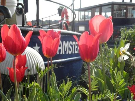 Houseboat 754 Amsterdam photo 3