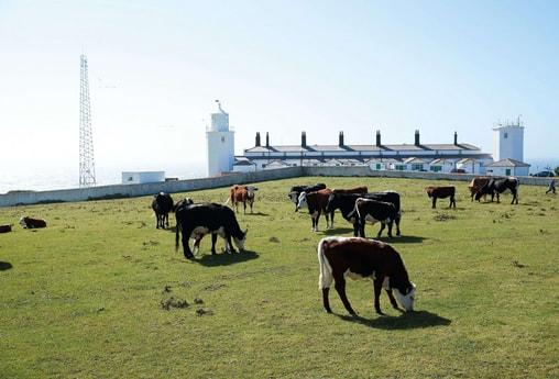 Faro 113 Helston foto 20
