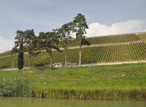 Vineyards seen from the canal.