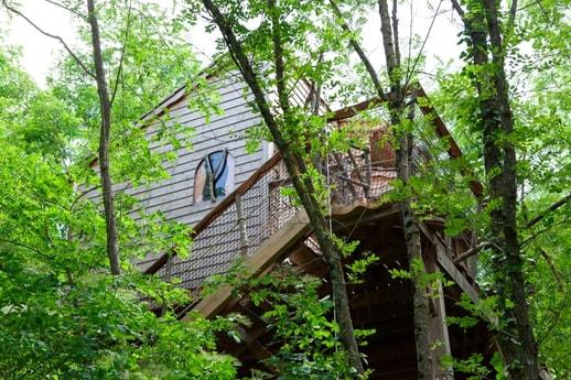 Treehouse 110 Tours photo 0