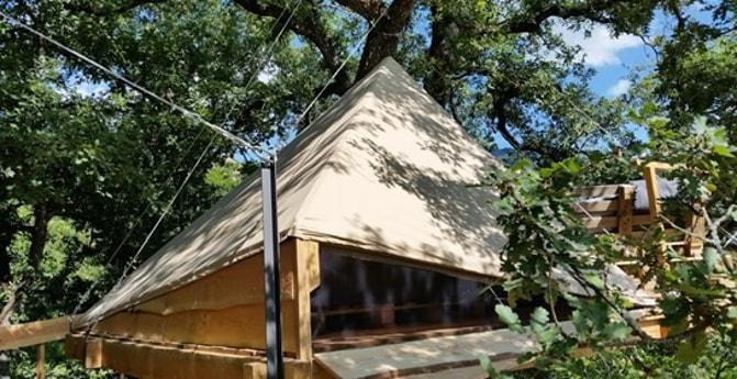 Natural tree house