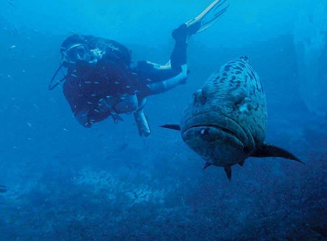 Stunning dive sites neaby
