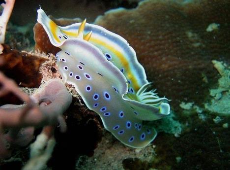Stunning dive sites