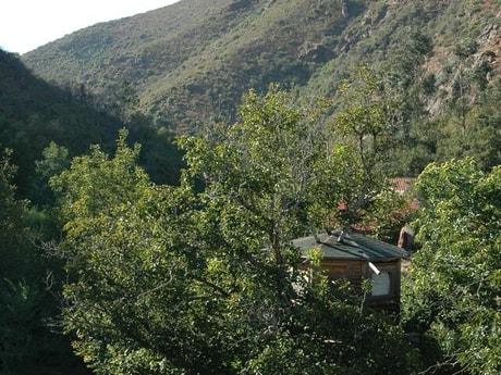 Beautiful Argave tree house