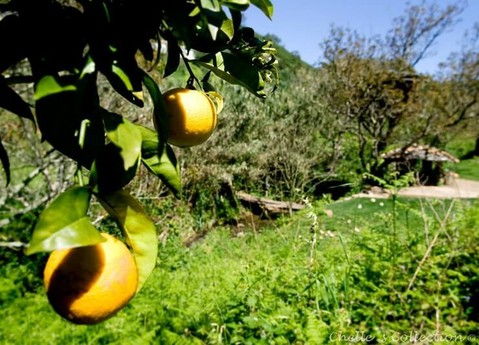 Orchards in the vallye