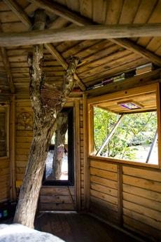Living tree - 100 year old walnut tree