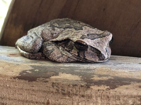 Sweet treehouse frog